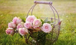 fiori rosa mazzo di rose