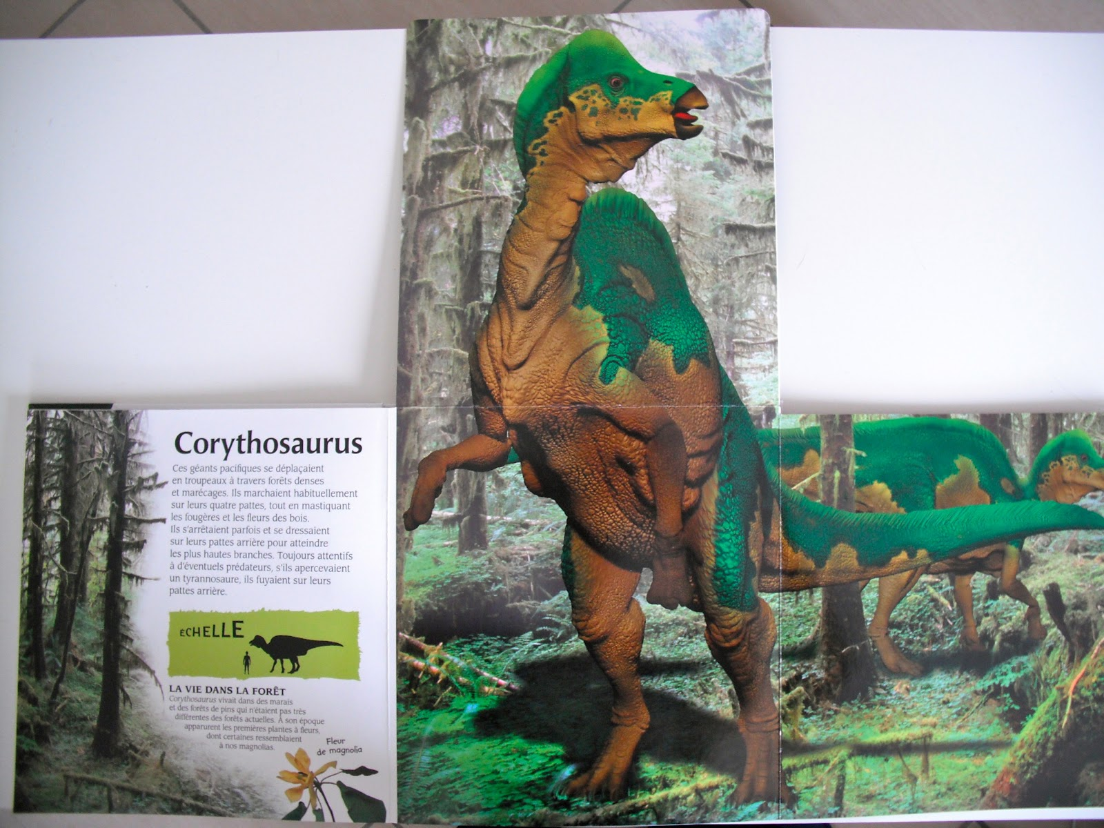 Sous Le Feuillage Le Livre Geant Des Dinosaures