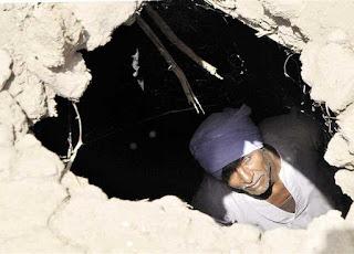 Termite infestations wreck havoc across Upper Egypt