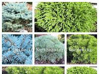 Landscaping Dwarf Evergreen Shrubs
