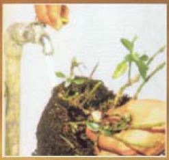 Tukang Taman Surabaya tentang tips merawat tanaman hias dalam pot