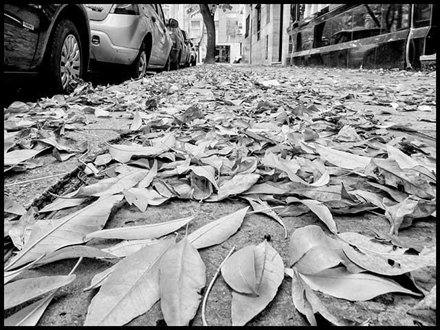 Montón de hojas caída de los árboles.