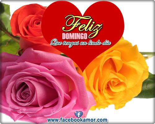 Rosas Rojas Imagenes Gratis
