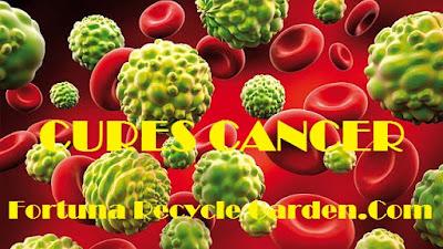 """<img src=""""Anti-Cancer Drugs.jpg"""" alt=""""Biji Anggur Sebagai Anti-Cancer Drugs,Informasi Yang Selama Ini Dirahasiakan  """">"""