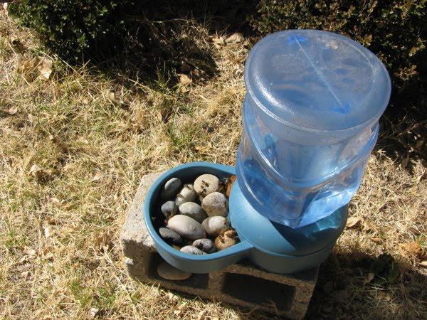 Πώς μπορώ να απομακρύνω τις μέλισσες από μια πηγή νερού