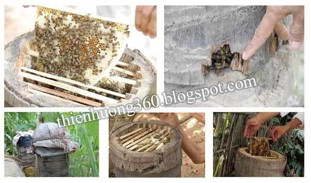Ong mật thường sống trong hang, hốc đá hoặc bọng cây