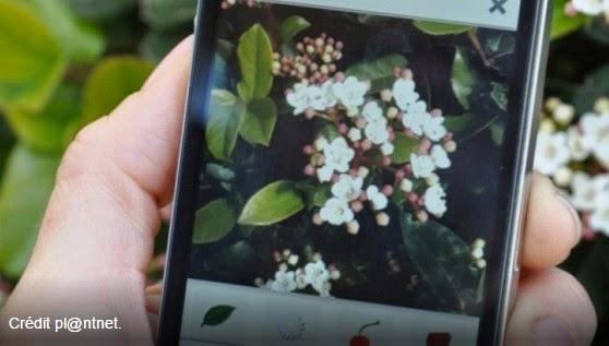 不認識這植物嗎?沒關係,讓法國的Pl@ntNet APP告訴你!