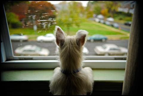 Cachorro ideal para apartamento