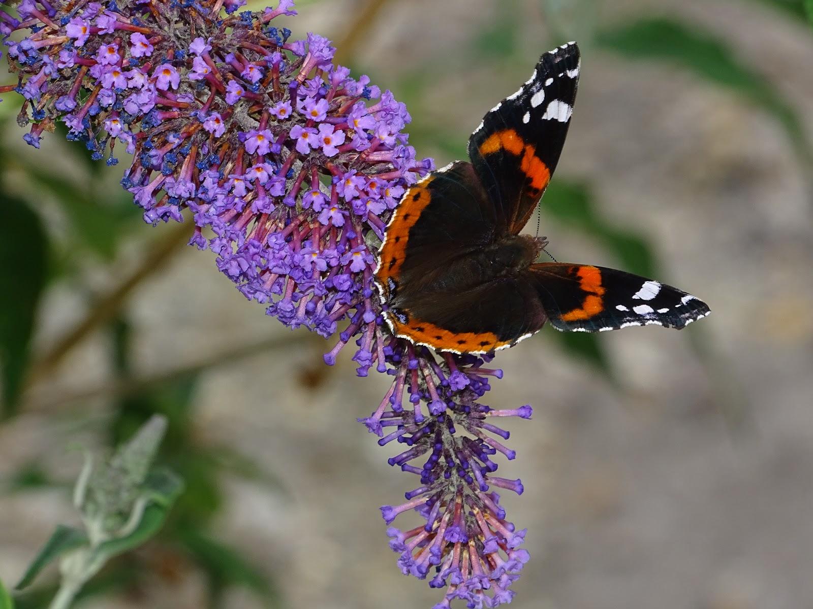 Papillons Tout Simplement