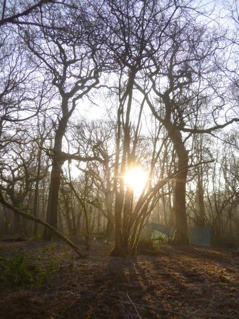 Driftwood Dreams: Werifesteria