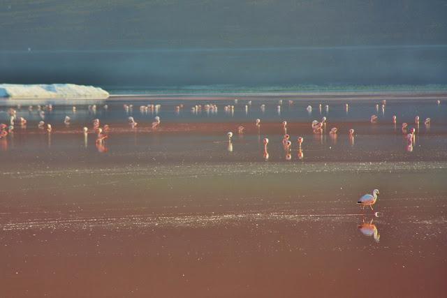 Laguna Colorada, uma das lagunas altiplânicas da Bolívia