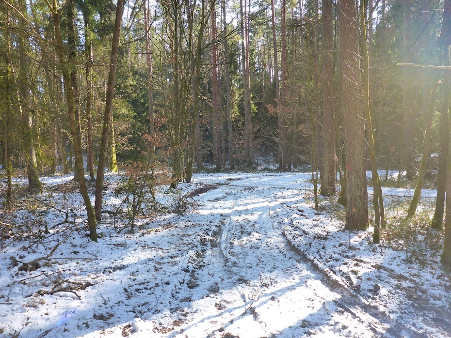 Лес, зима, снег