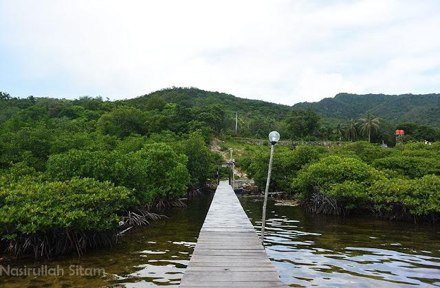 Rimbunnya Pohon Mangrove di pesisir pantai