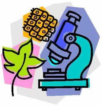 Ruang Lingkup Biologi, Permasalahan Biologi, Cabang-cabang Biologi, Manfaat dan Bahaya Perkembangan, Metode Ilmiah Biologi)
