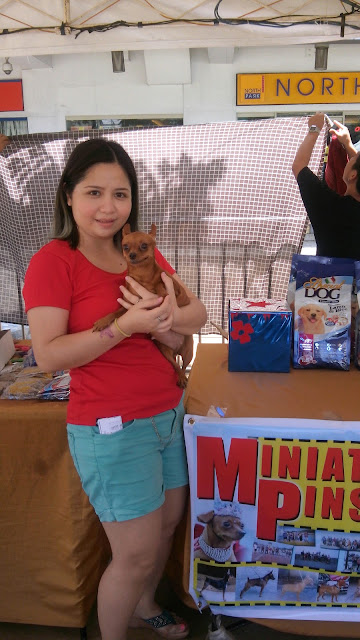 pet blogger philippines, mini pinscher,