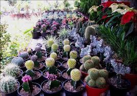 Pasar Bunga Kayon