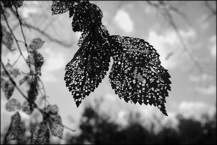 fotografia,naturaleza,valencia