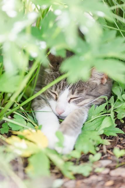 Impressionen aus dem Rosengarten, Pomponetti, Katzenmädchen