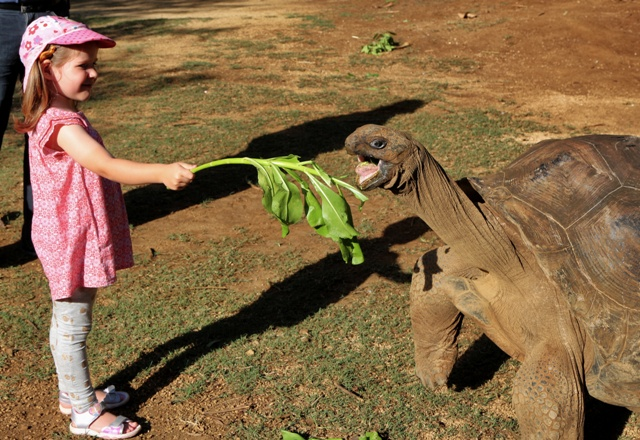 Dar de comer a las tortugas en La Vanille Nature Park