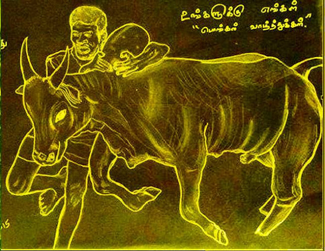 PENCIL DRAWING - JALLIKATTU