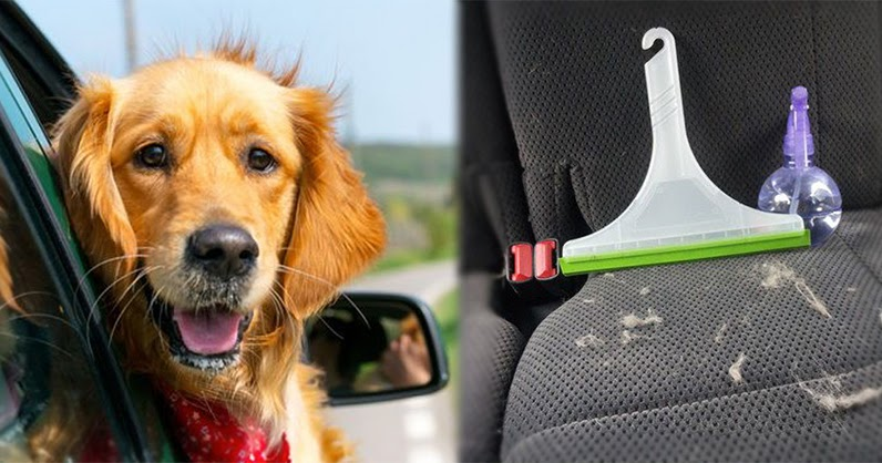 How To Easily Get Dog Hair Out Of Car