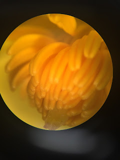 The story of the seed the male reproductive part of a flower called a stamen has a stalk known as a filament that comes up from the base of the flower and on top of the filament mightylinksfo