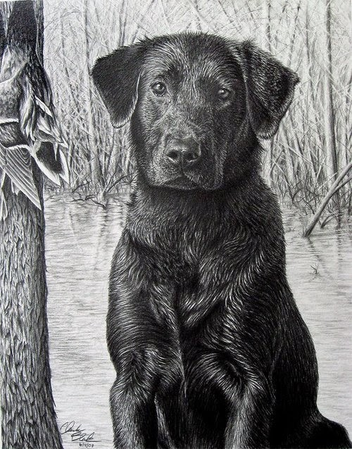 12-Charles-Black-Hyper-Realistic-Pencil-Drawings-of-Dogs-www-designstack-co