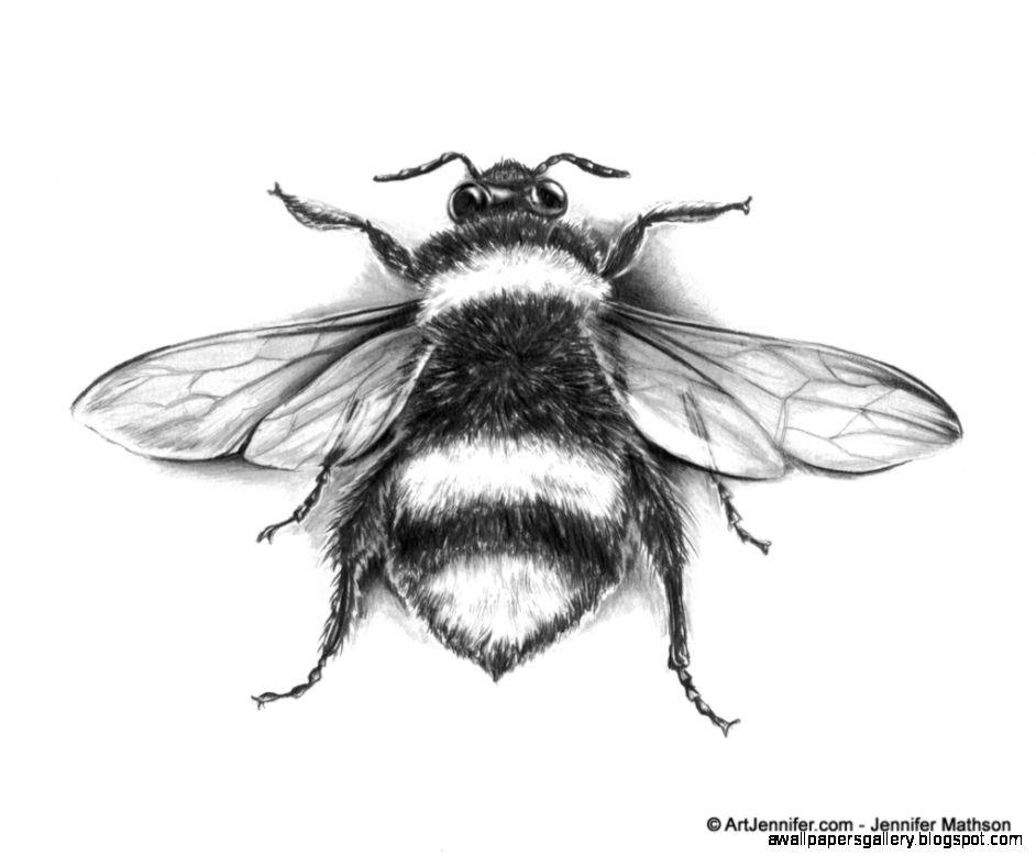 Honey Bee Scientific Drawing | www.imgkid.com - The Image ...