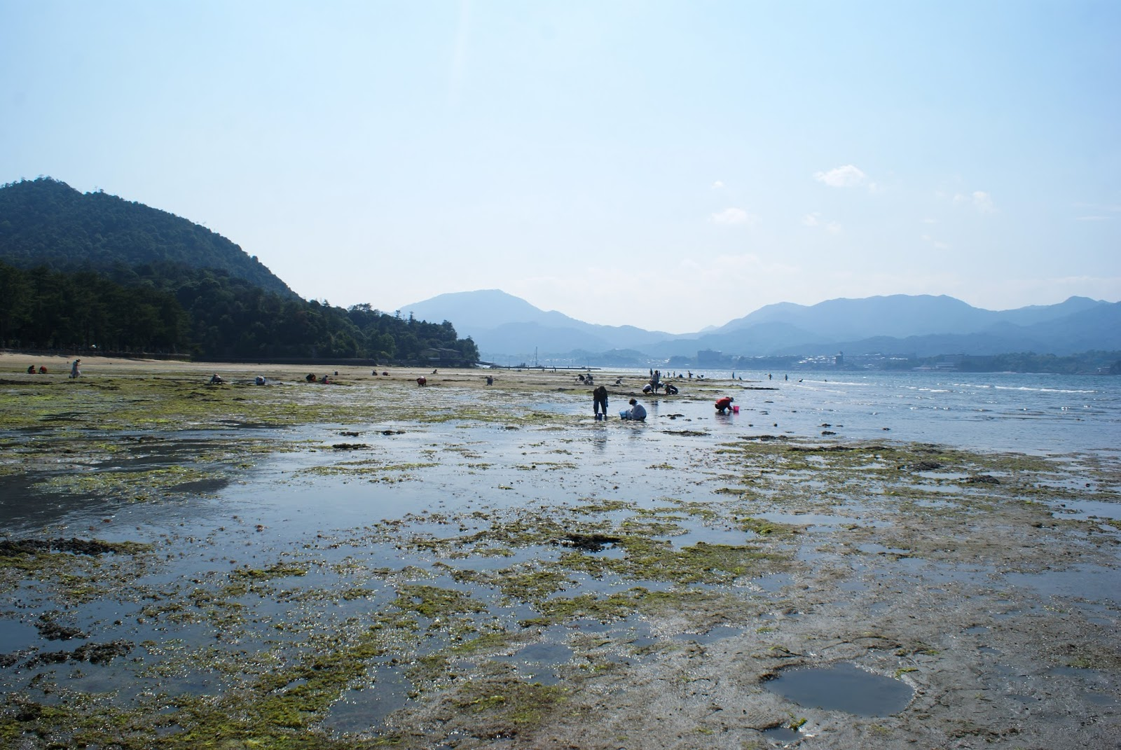 torii sea miyajima itsukushima japan