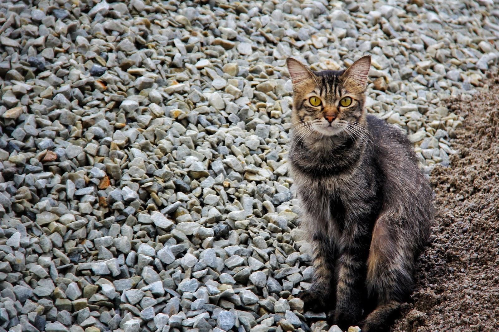 20 Koleksi Gambar Kucing Comel Bernama Tambi 18