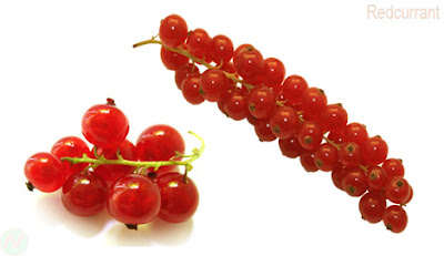 redcurrant fruit