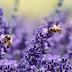 Για να μην εξαφανιστούν, έκαναν τις μέλισσες κατοικίδια!