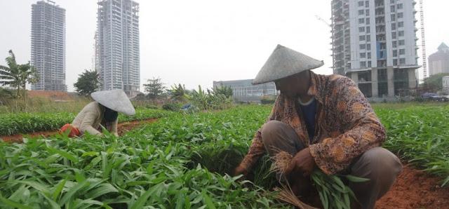 DKI Susun Grand Design Pertanian Kota
