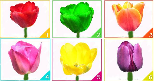 Выберите тюльпан и узнайте что-то новое о своей личности!