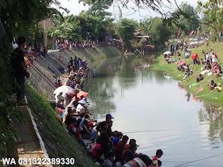 Umpan Serbuk Ikan Mas Di Sungai