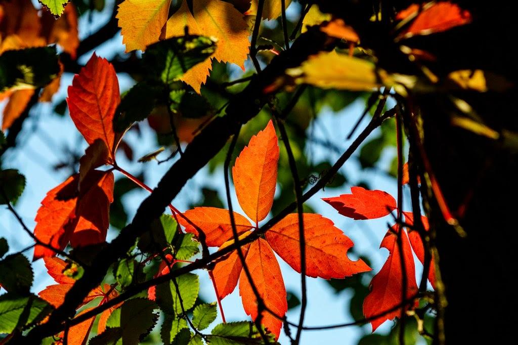 vers-szombat, vers, költemény, évszakok, ősz,