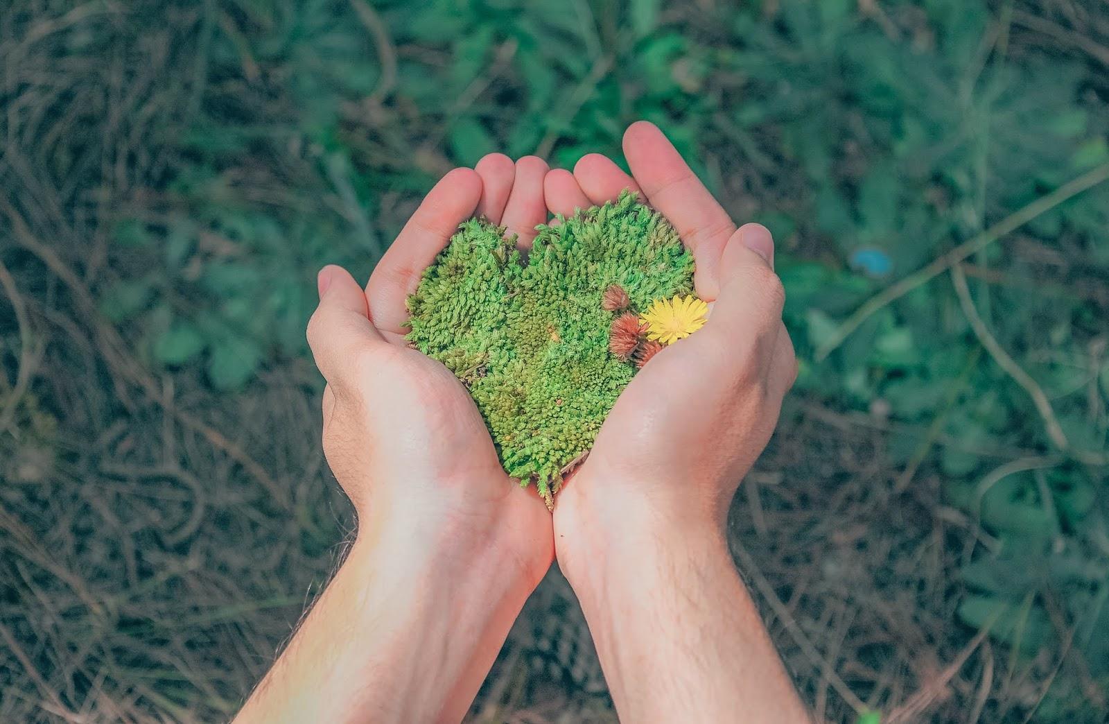 arquivos de rafaela, mãos com flores