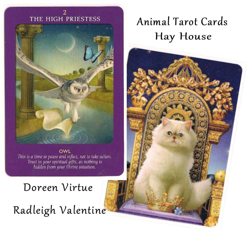 Tarot Notes Animal Tarot Time The High Priestess