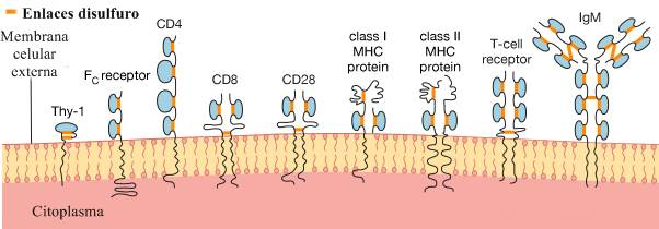 Anticuerpo: proteínas