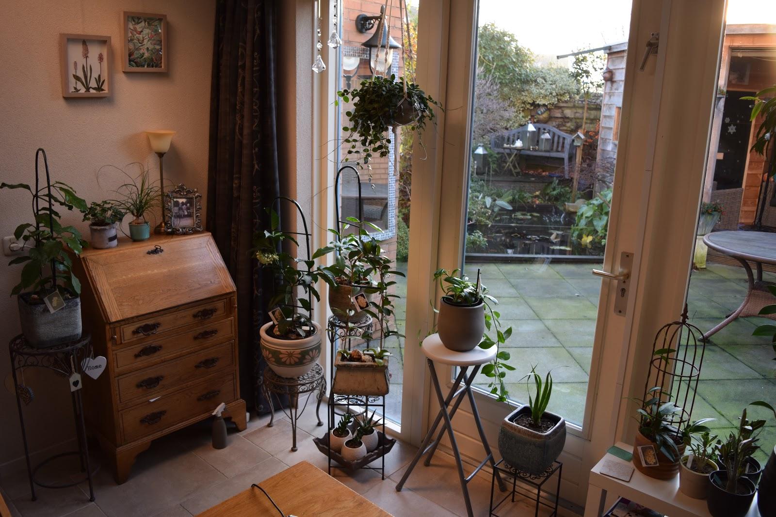 Hoya plant: Verzorging in winter