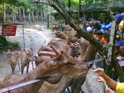 Deerland Kuala Gandah