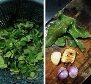daun kelor bawang merah untuk biduran