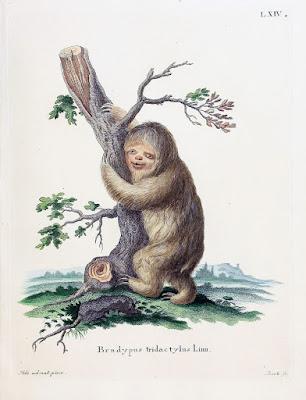 J.C.D. Schreber, Die Säugthiere in Abbildungen nach der Natur, 1855, sloth