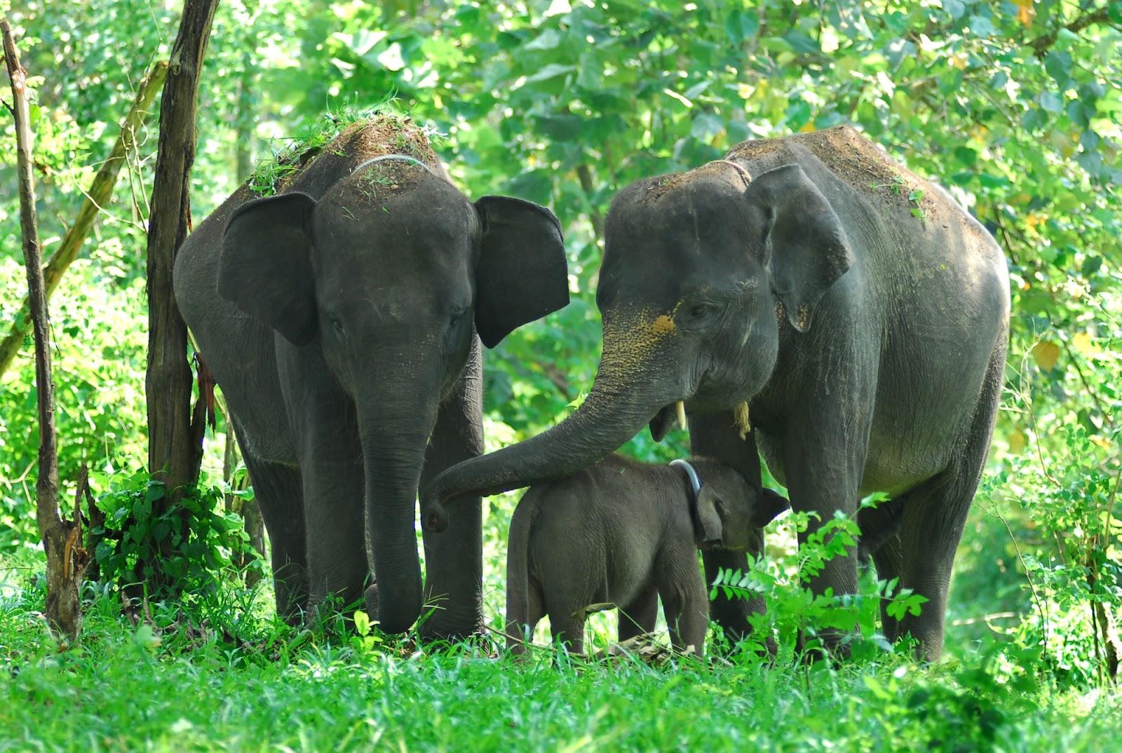 60 Gambar Hewan Gajah Badak dan Jerapah  Ayeeycom