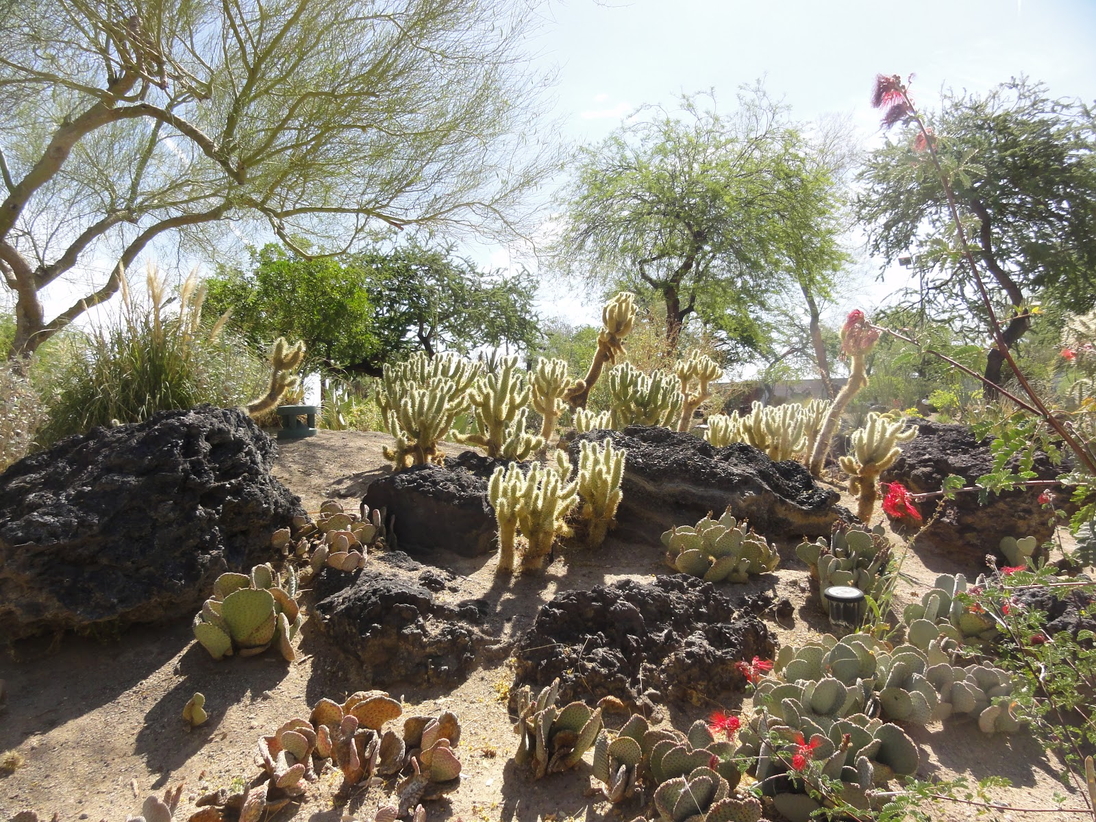 Gogardennow The Gardening Blog Ethel M S Chocolate Factory And Cactus Garden