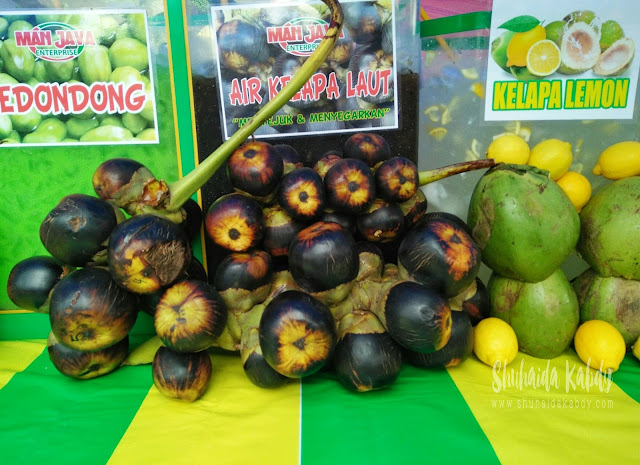 kelapa laut man java di pasar ramadhan btp,kelapa laut