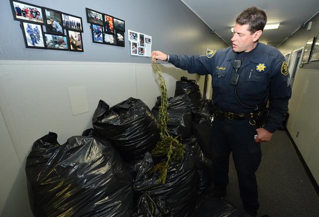 Borderland Beat: Oakland: 10 marijuana grow houses linked to Sinaloa
