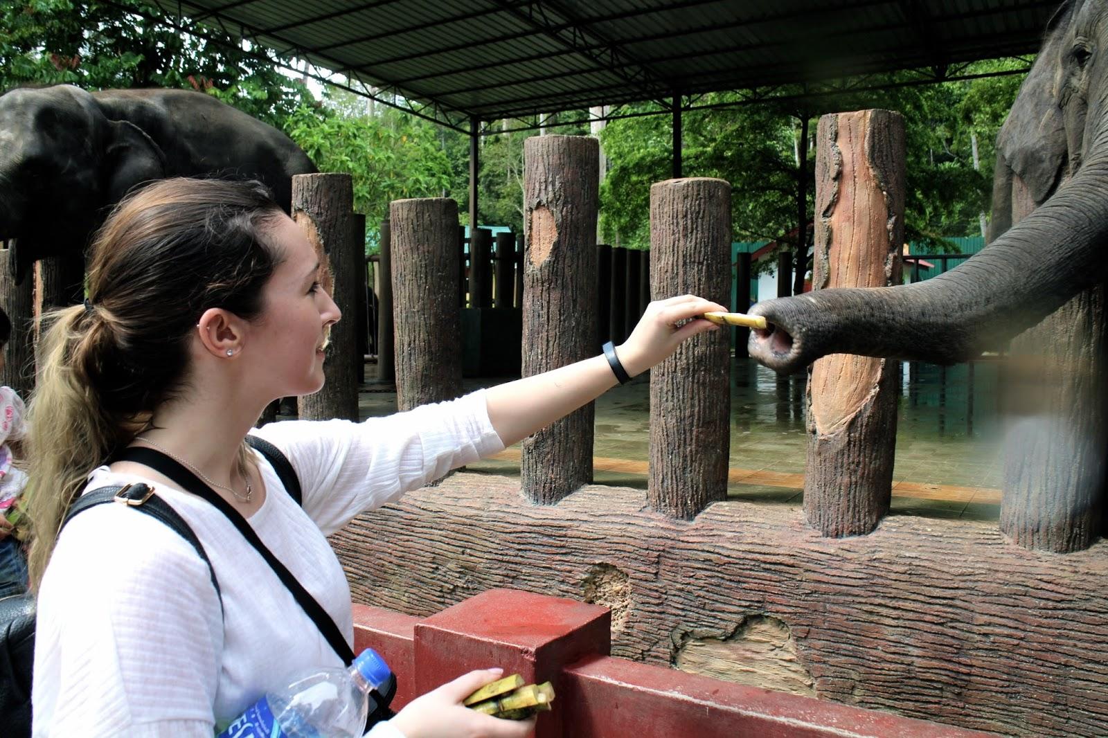 Feeding an elephant in Malaysia | The Dress Diaries