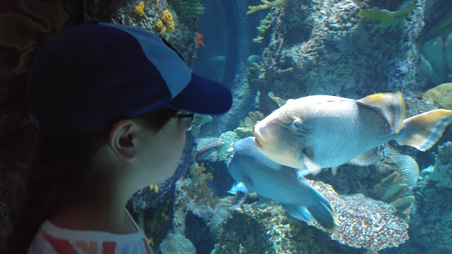 girl looking into aquarium