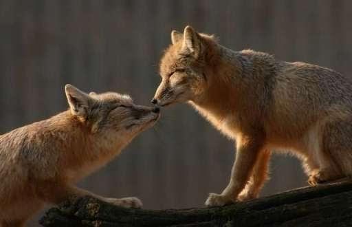 animals amazing creatures creature